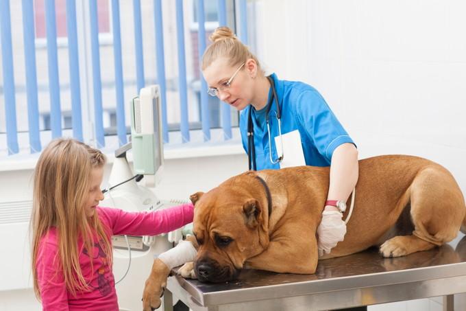 犬の診察をしている看護師と娘