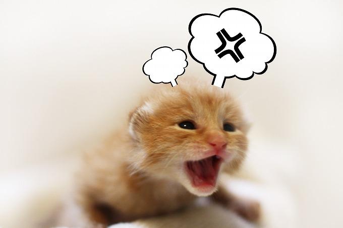 猫が怒っている